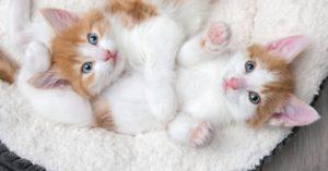 L'apprentissage de la propreté de votre chaton