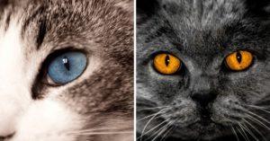 Les chats et leurs yeux si UNIQUES !
