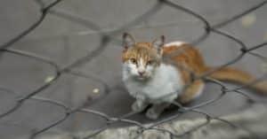 5 astuces pour éviter que votre chat ne se perde