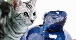 Pourquoi les chats domestiques ont-ils besoin d'une fontaine à eau
