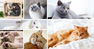 101 faits amusants sur les chats !