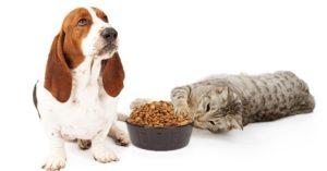 Chiens vs chats, 5 différences de leurs besoins nutritionnels