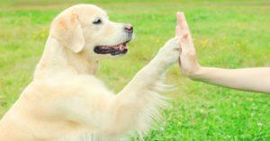 Comment utiliser le renforcement positif pour éduquer votre chien