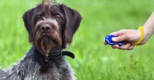 Éducation du chien, 15 conseils pour démarrer avec le clicker