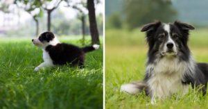 9 étapes de la première année de votre chien et au-delà