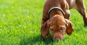 Pourquoi vous devez laisser votre chien renifler pendant sa promenade