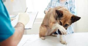 Signes que votre chien est stressé et comment y remédier